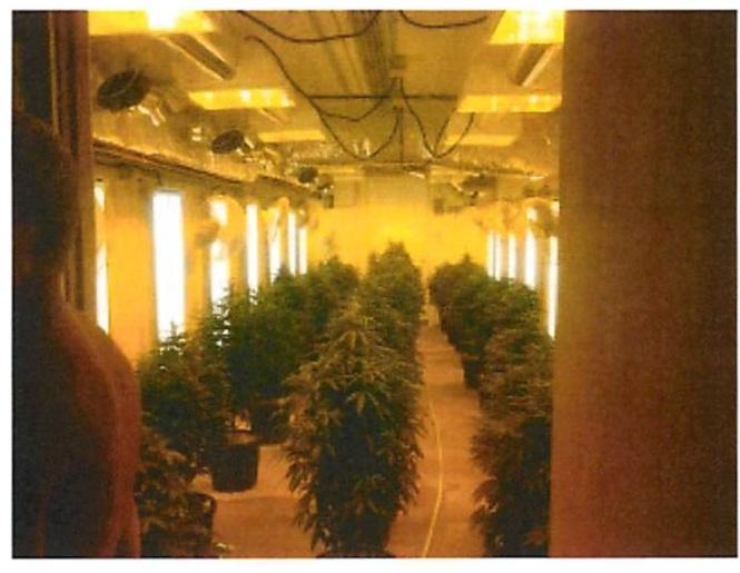 Pot Growing Operation Photos 3 plants