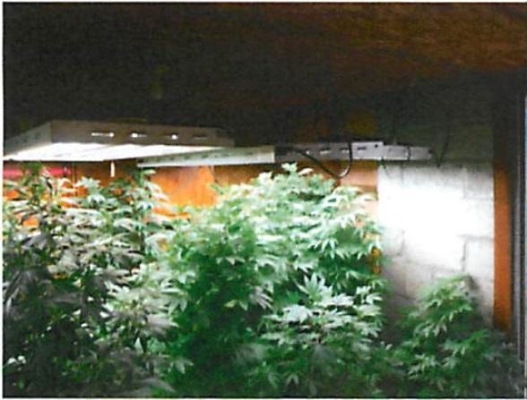 Pot Growing Operation Photos 7 pot plants