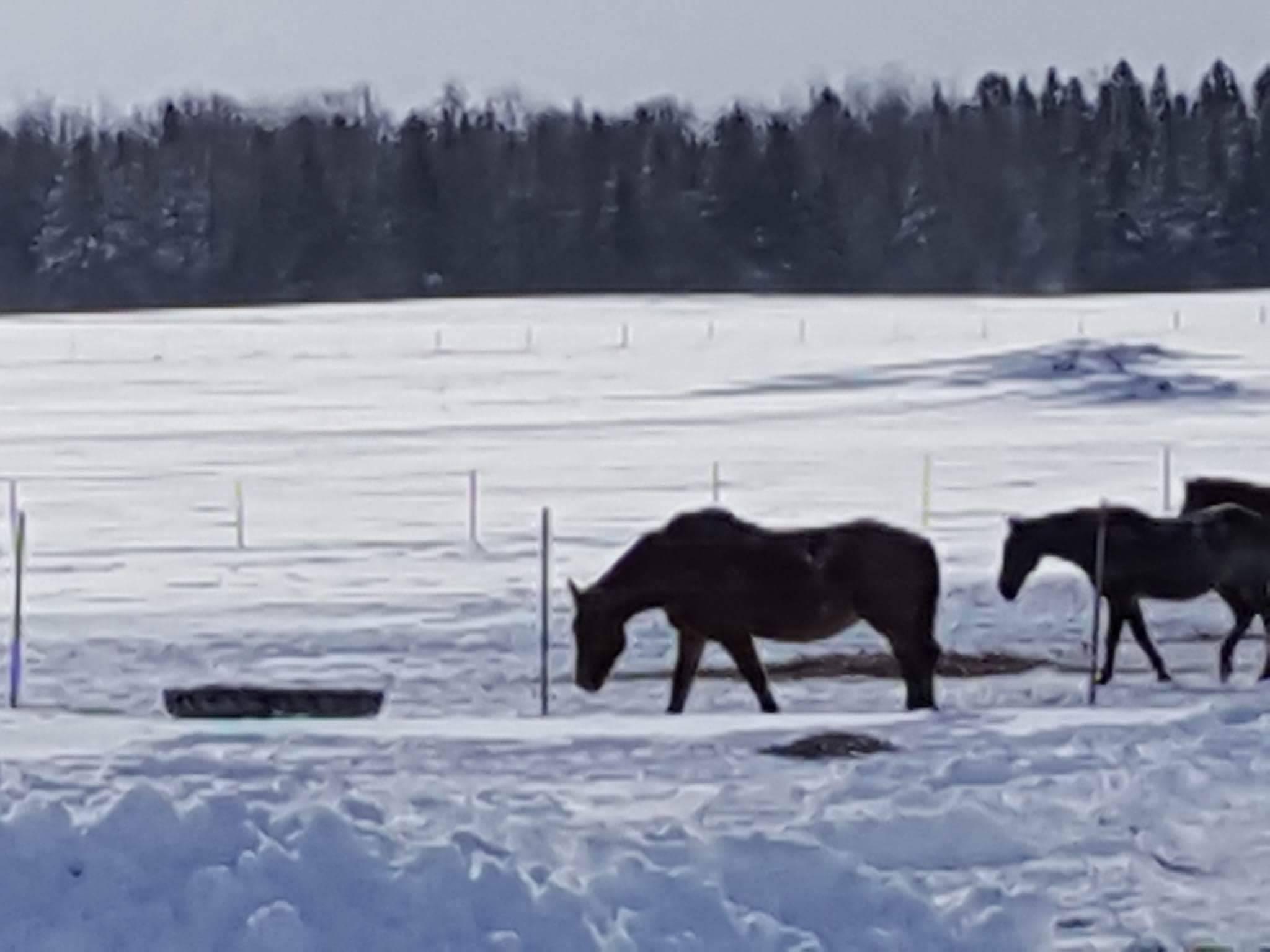 Download Wallpaper Horse Snow - 2017-mackinac-horses-jan-2017-1  You Should Have_628821.jpg?w\u003d2048\u0026h\u003d1536