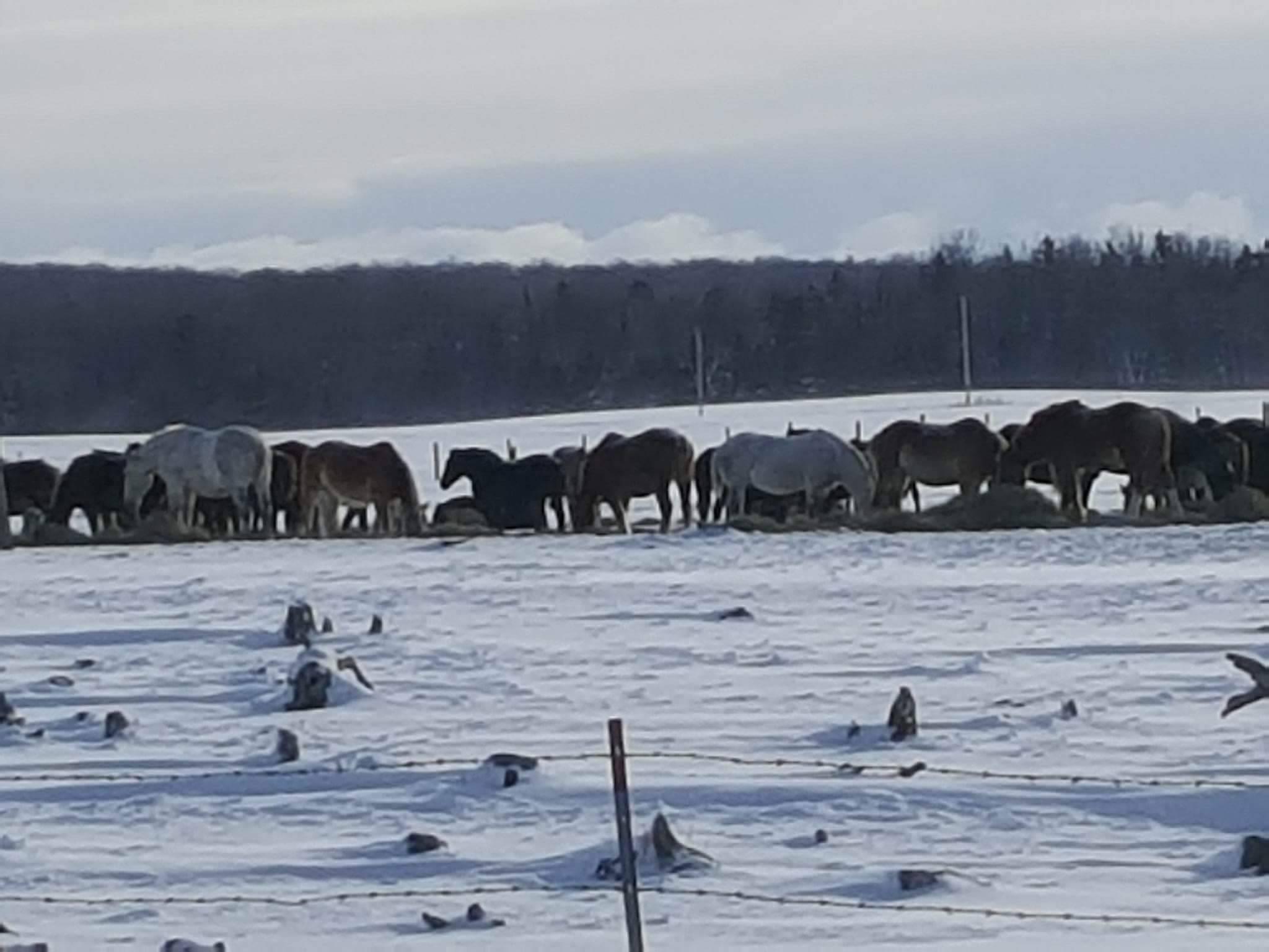 Download Wallpaper Horse Snow - 2017-mackinac-horses-jan-2017-2  You Should Have_628821.jpg?w\u003d2048\u0026h\u003d1536