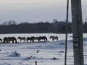 2017-mackinac-horses-jan-2017-3