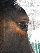 ice-on-lashes-but-says-horse-is-warm
