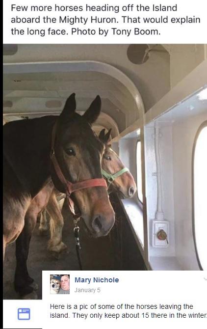 mackinac-horses-leaving-the-island